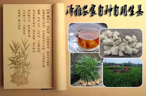 【泽雅】仅需7.5元/斤(500g)即可享受原价10元/斤(500g)的泽雅农家自种自用生姜!