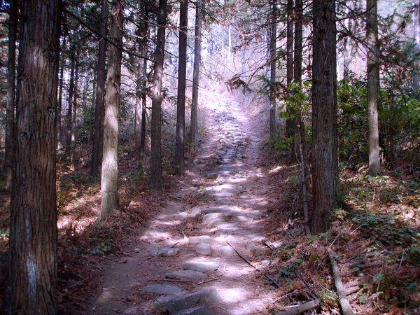 白马山森林公园风景图