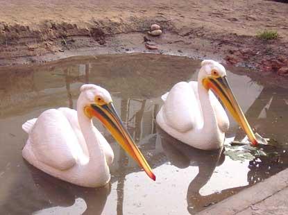 温州动物园风景图